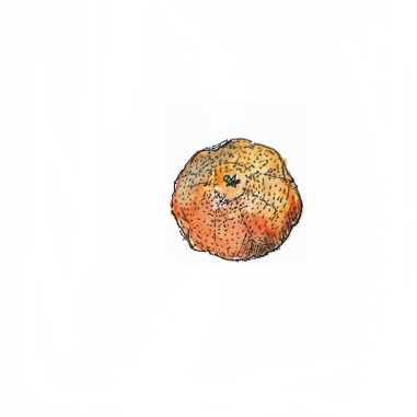 fruit-clémentine-couleur-2