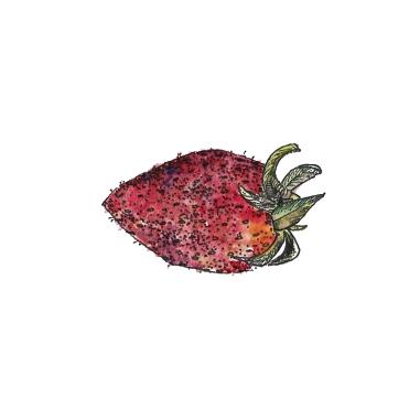 fruit-fraise-couleur