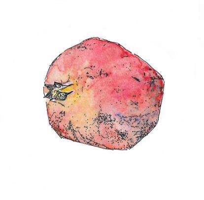 fruit-grenade-couleur-2