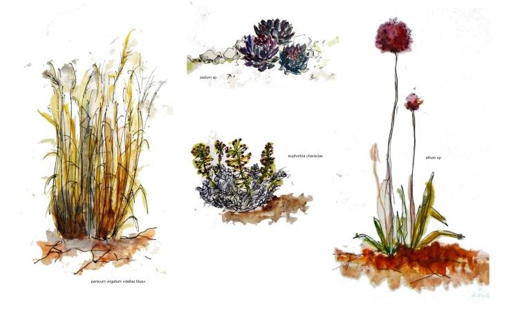 plantes 2 - copie